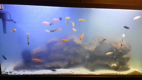 Bể cá bị đục do hỏng bơm