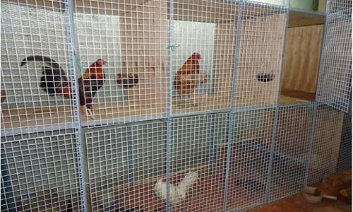 làm chuồng gà bằng lưới