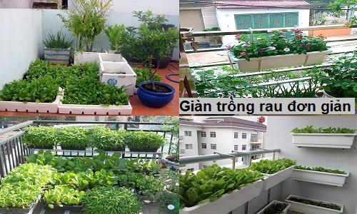 mãu giàn trồng rau