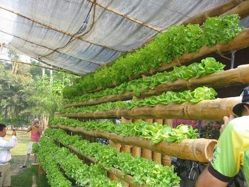 giàn trồng rau treo tường