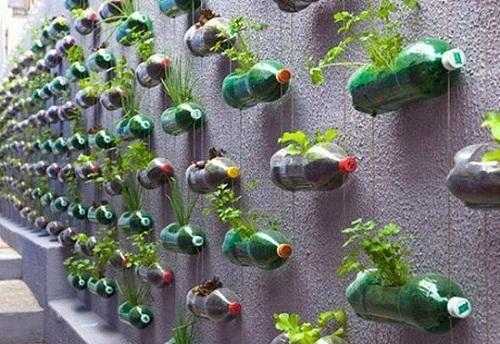 cách làm giàn trồng rau bằng chai nhựa