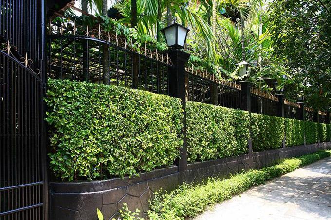 tường rào đẹp